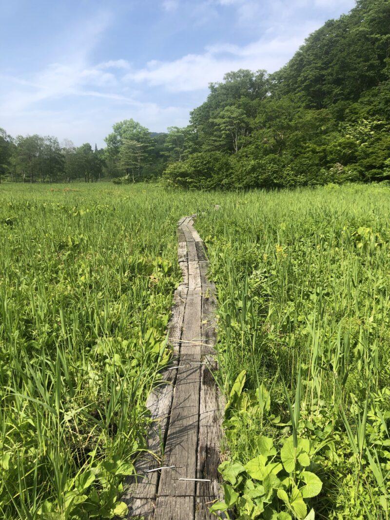斑尾高原の湿原